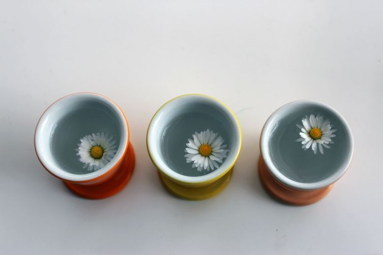 gänseblümchen 2
